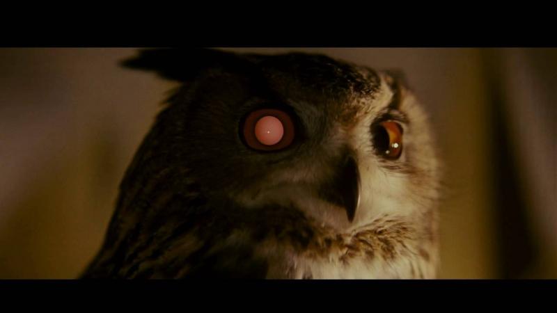 Owlcyone420