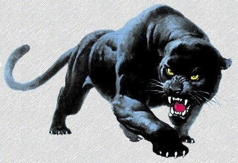 Panther11