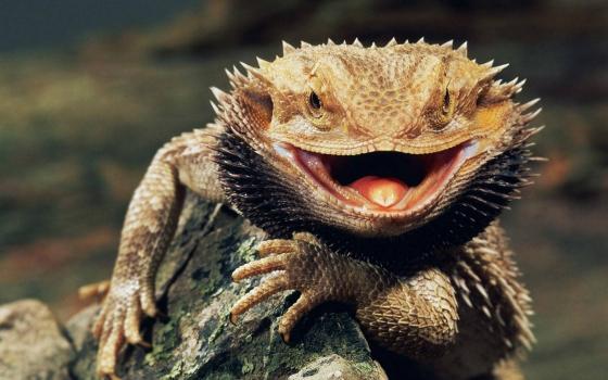 Star-lizard